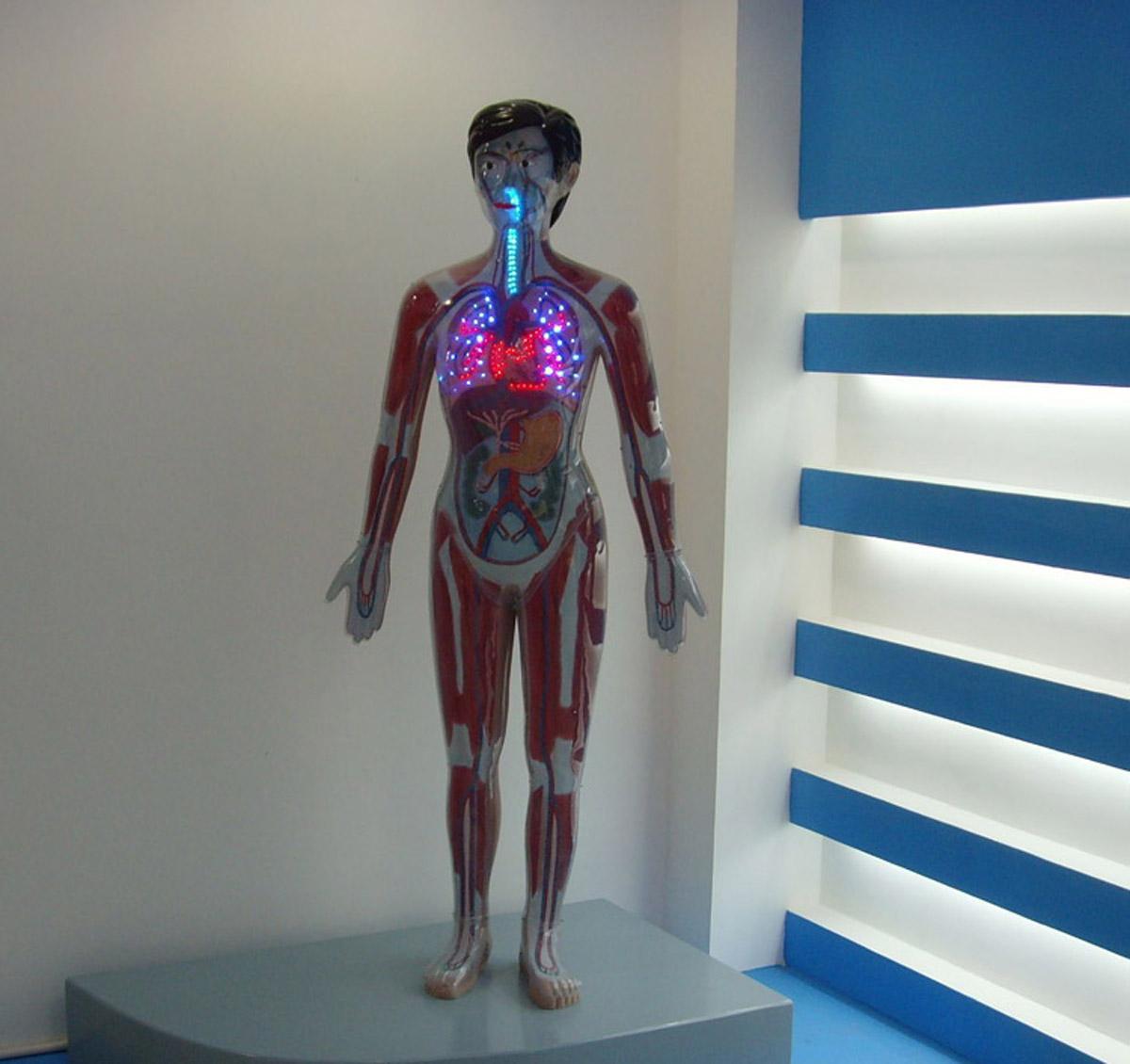 深泽安全体验微电脑毒品显示模型